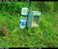 26 September 2014: CNRS lets 14 farmed hamsters loose in a large paddock
