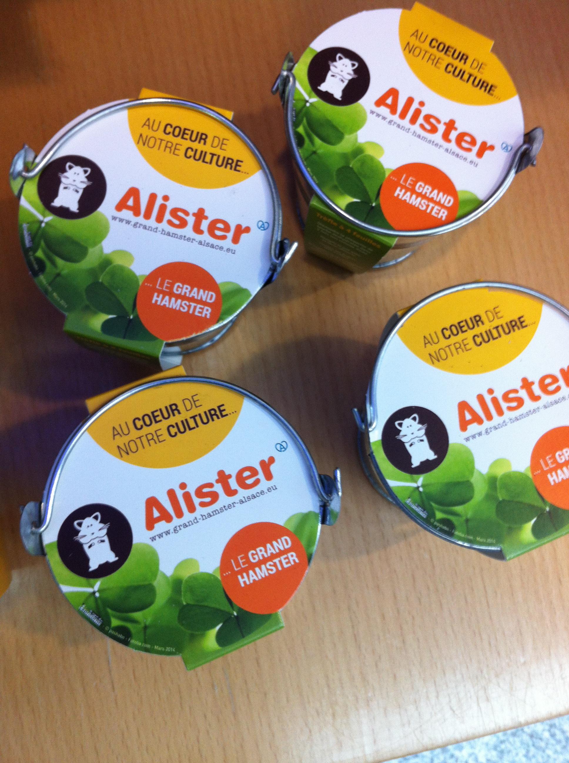 Pot de trèfle à quatre feuilles : un porte-bonheur pour le lancement du projet LIFE ALISTER et une nourriture très appréciée du Grand Hamster.