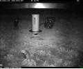 Les hamsters sont de sortie !