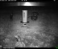 Die Hamster schnuppern Frühlingsluft!