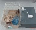 La pollution lumineuse impacte-t-elle la physiologie et le comportement des Grands hamsters ?