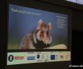 Eine Dissertation, die viele Lösungsansätze für das Überleben des Hamsters im Elsass eröffnet