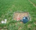 Le semis direct favorable aux vers de terre