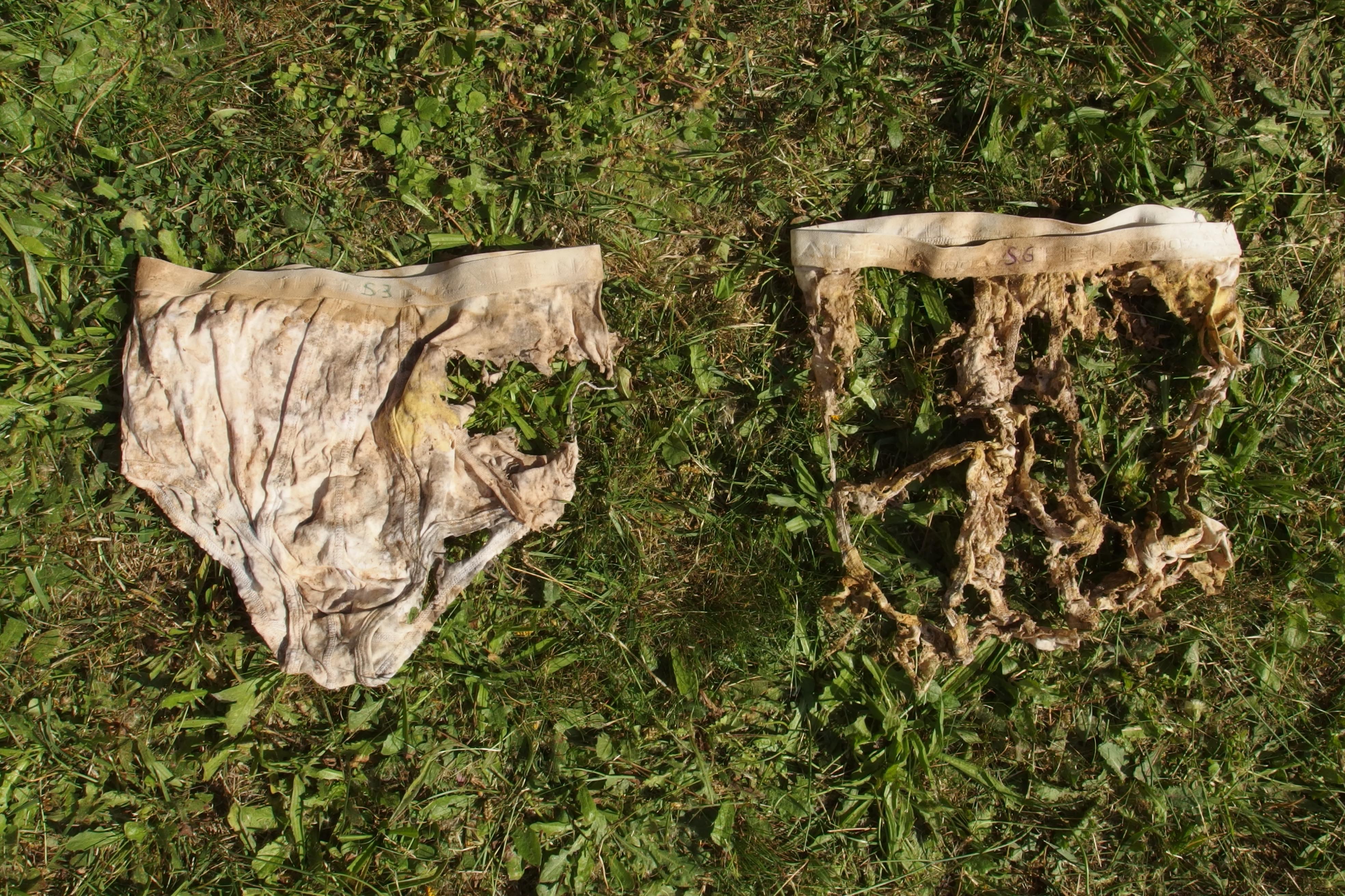 Culture de blé – précédent maïs – en labour (à gauche) et en Technique Culturale Simplifiée (à droite) – photo Baptiste Fajfer / CAA.