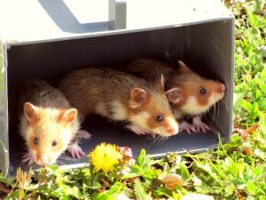 Découverte du milieu extérieur chez 3 jeunes d'une même fraterie âgés d'un mois