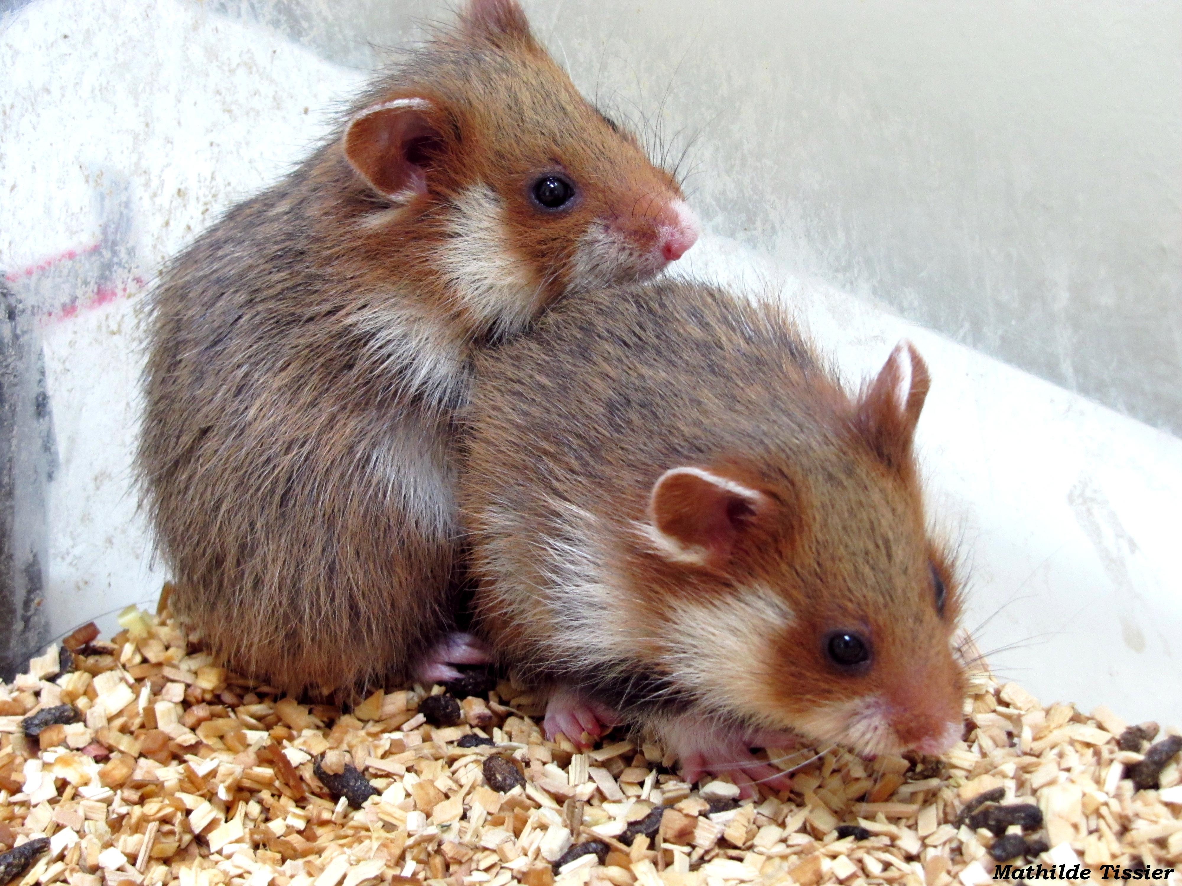 2 jeunes d'une même fraterie dans une élevage du projet ALISTER