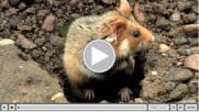 clindoeil-capture-video