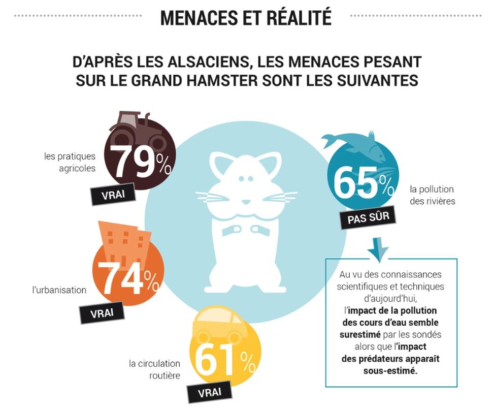 image infographie enquête
