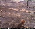 Pourrait-on s'affranchir de la contrainte du sol pour réintroduire des Grands hamsters en milieu sauvage ?