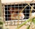 European Hamsters in fields and in urban periphery zones